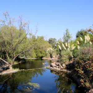 bosquesantiago-amosantiago
